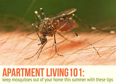 Get Rid Of Mosquitoes And Stop Bites This Summer With