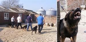 Next training course alphaguardk9 agk9 training for Dog handler training