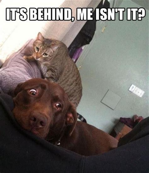The Dog Meme - scarried dog meme