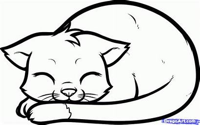 Cat Drawing Sleeping Draw Face Step Clipart