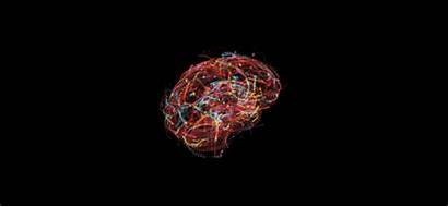 Quantum Brain Spin Consciousness Theory Science Physics