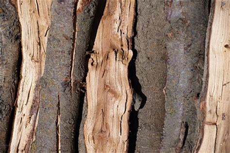 almond wood firewood information royal firewood los angeles