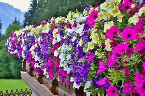 Blumen Für Sonnigen Standort : sonniger balkon pflanzen die sch nsten einrichtungsideen ~ Michelbontemps.com Haus und Dekorationen