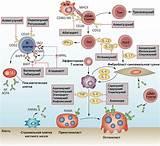 Моноклональные антитела препараты от ревматоидного артрита