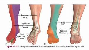 Em Didactic  Ankle Block  Landmark Technique