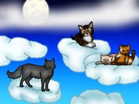 cat heaven cats heaven by nailita on deviantart