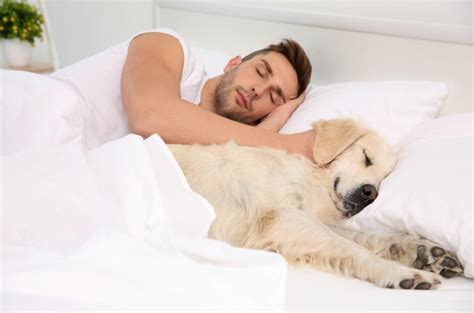 Sleep And Pets by Sleeping With Pets May Benefit Chronic Sufferers
