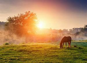 John Lloyd Young images horse grazing at sunset HD ...