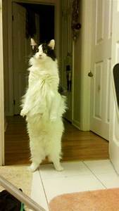25 Adorable Stand-up Cats Here To Make Your Day