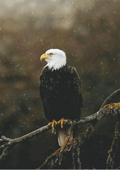 Eagle Bald Untitled Savely Charlotte Loretta Bia