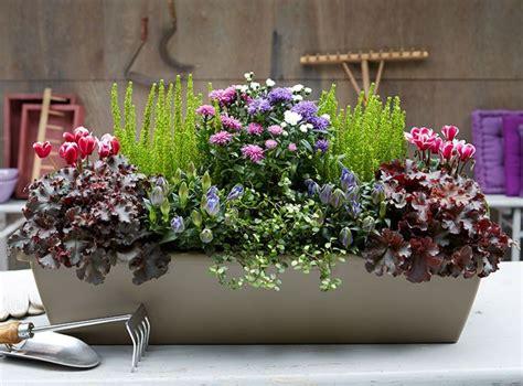 Winter Balkonpflanzen by Herbstbepflanzung Balkon Zimmerpflanzen Balkon