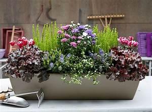Herbstblumen Garten Winterhart : herbstbepflanzung balkon zimmerpflanzen balkon terrasse pinterest garten balkon und ~ Frokenaadalensverden.com Haus und Dekorationen