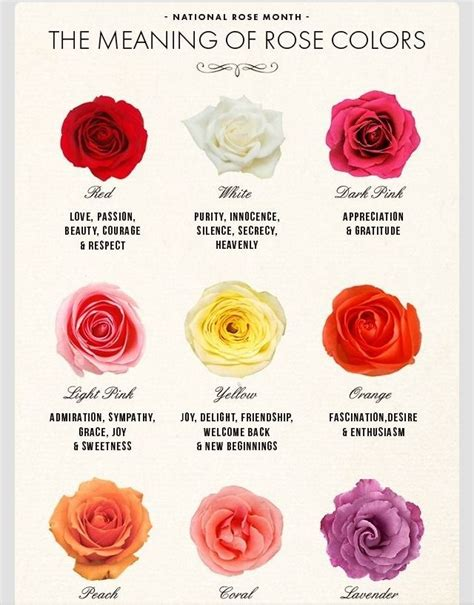 flower color meanings the meaning of colors truspar flowers