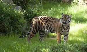 Tiger Imaje - impremedia.net