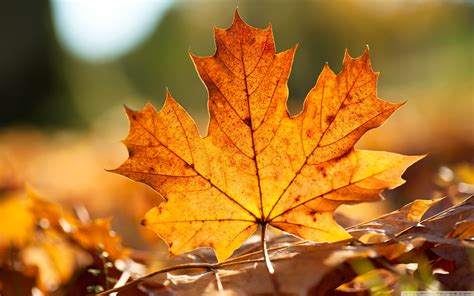 Autumn Lieder Schubert, Schumann, Brahms  The Listeners