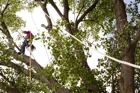 learn   oppd tree maintenance services oppd