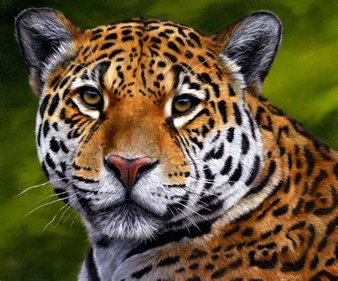 How Are Jaguars Endangered by Endangered Jaguars Help Stop The Persecution
