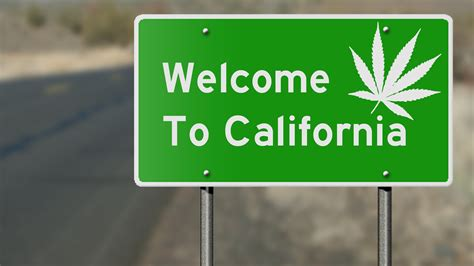 californias marijuana industry   mess  data shows