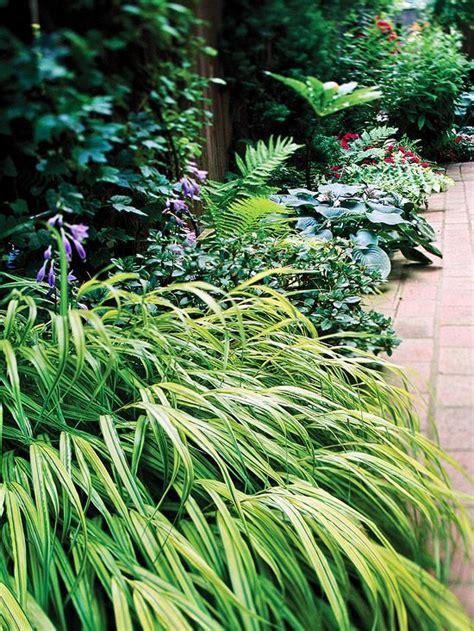 plants shade grass perennials garden yellow japanese yard variegated groundcovers bhg varieties easiest areas sun grow shaded flowers growing hakone