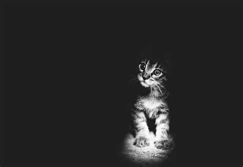 photo bébé noir et blanc top 25 des photos de chats en noir et blanc yummypets