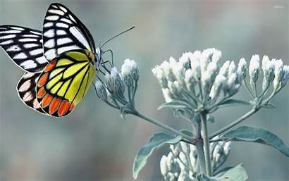 Butterfly Animals Wallpapers