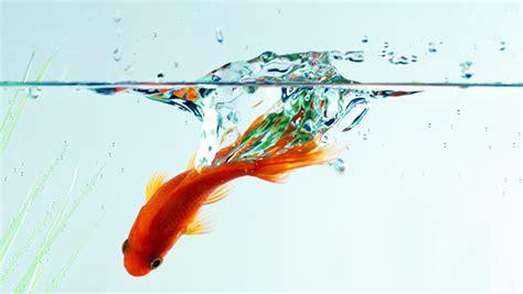 le site du poisson l eau de l aquarium