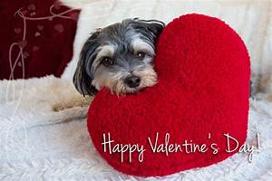 Happy Valentine S Day From My Dog Cute Pictures For ...