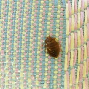 bed bug photos san diego bed bug control san jose bed With bed bugs san diego