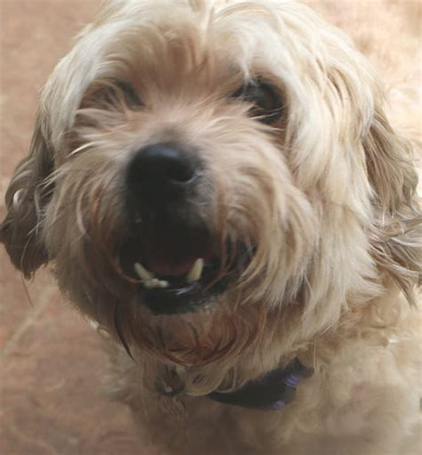 shaggy friends houston shaggy dog rescue