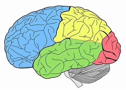 Brain Areas Understanding Five Major