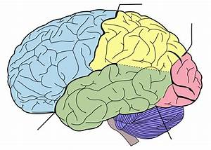 File Brain Diagram Without Text Svg