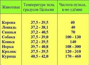 Васир от геморроя цена в украине