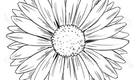 sunflower drawing  getdrawings