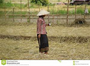 Rice Worker Stock Image - Image: 2039291