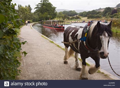 Horses On A Boat by Narrow Boat On Llangollen Canal With On