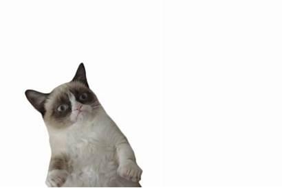 Transparent Cat Grumpy Words Collages Follow