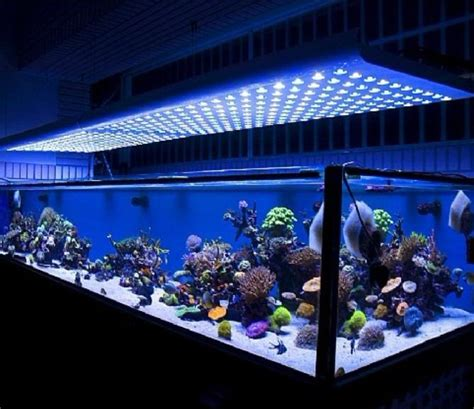 blue led aquarium light 18 amazing led lighting ideas for your next project