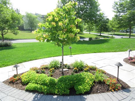 best ornamental trees dwarf ornamental trees zone 5 www pixshark com images galleries with a bite