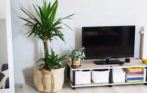 Plante De Salon : d coration salon avant apr s my french muse ~ Teatrodelosmanantiales.com Idées de Décoration