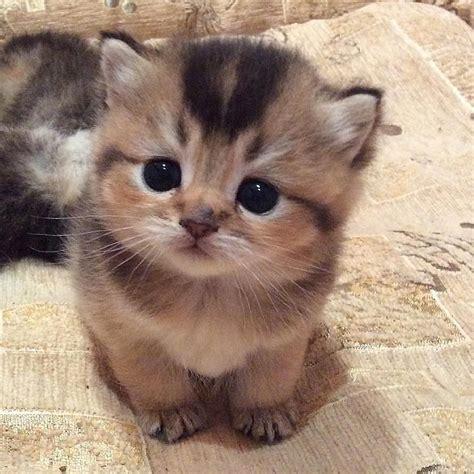 Adorable Kitten Cute Cats