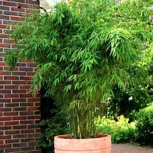 Bambou En Pot Pour Terrasse : comment mettre en valeur sa terrasse mobilier exterieur ~ Louise-bijoux.com Idées de Décoration