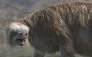 Pin Ice-age-sloth-1366x768-274514 on Pinterest
