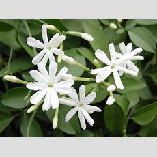 Best Smelling Houseplants  Diy Network Blog Made
