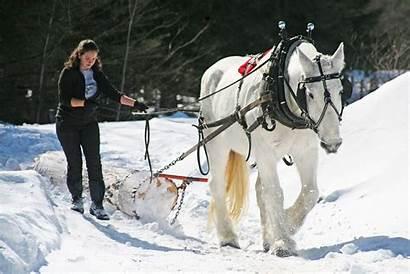 Draft Horse College Sterling Farming Horses Logging