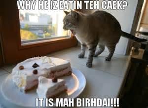 Funny Cat Happy Birthday Wishes