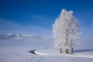 Yellowstone Winter Christmas Tree