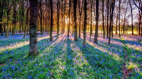 Sunlight, Trees, Plants, Nature, Landscape, Flowers