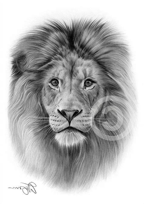 pin  pinfire  art pencil drawings lion tattoo lion