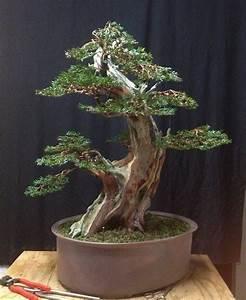 Bonsai Baum Garten : bonsai amazing bonsai trees pinterest ~ Lizthompson.info Haus und Dekorationen