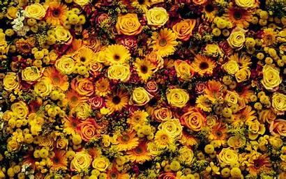 Flowers Carpet Composition Floral 4k Ultra Background